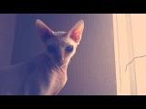 Розовый кот (гугл тетка)